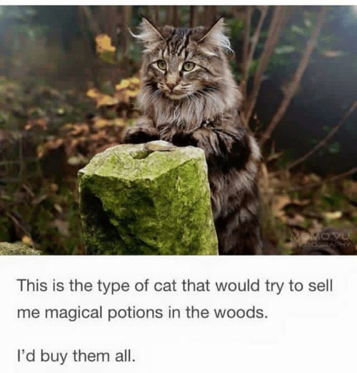 Cat, Them, and All: MOVU  aGRAPHY  This is the type of cat that would try to sell  me magical potions in the woods.  I'd buy them all