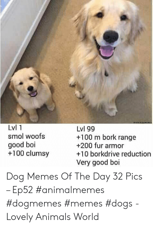 Animals, Dogs, and Memes: mtnteepgamemcs  Lvl 1  Lvl 99  +100 m bork range  +200 fur armor  +10 borkdrive reduction  smol woofs  good boi  +100 clumsy  Very good boi Dog Memes Of The Day 32 Pics – Ep52 #animalmemes #dogmemes #memes #dogs - Lovely Animals World
