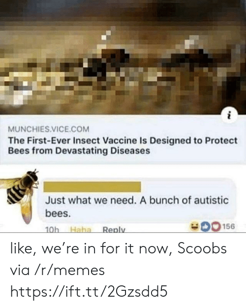 First Ever: MUNCHIES.VICE.COM  The First-Ever Insect Vaccine Is Designed to Protect  Bees from Devastating Diseases  Just what we need. A bunch of autistic  bees.  O156  Haha  Reply  10h like, we're in for it now, Scoobs via /r/memes https://ift.tt/2Gzsdd5