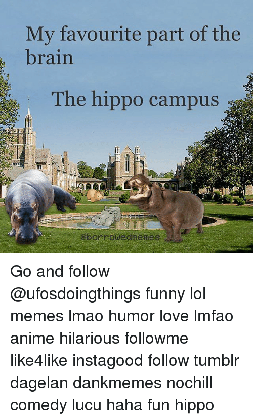 Anime Funny And Lmao Mv Favourite Part Of The Brain The Hippo Campus