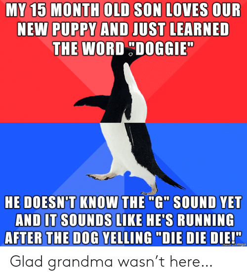 """learned: MY 15 MONTH OLD SON LOVES OUR  NEW PUPPY AND JUST LEARNED  THE WORD DOGGIE  HE DOESN'T KNOW THE """"G"""" SOUND YET  AND IT SOUNDS LIKE HE'S RUNNING  AFTER THE DOG YELLING """"DIE DIE DIE!""""  haue imgur Glad grandma wasn't here…"""