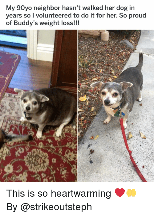 buddys: My 90yo neighbor hasn't walked her dog in  years so I volunteered to do it for her. So proud  of Buddy's weight loss!!! This is so heartwarming ❤️🤲 By @strikeoutsteph