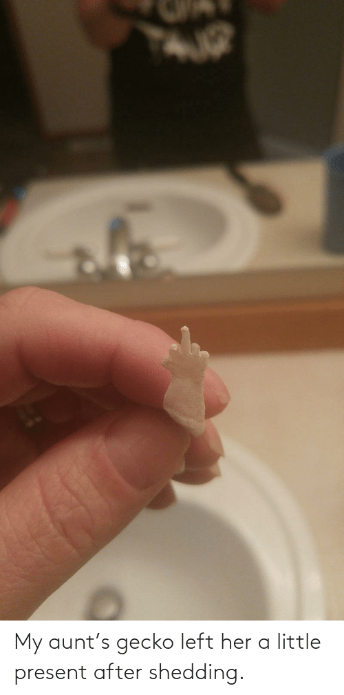 present: My aunt's gecko left her a little present after shedding.