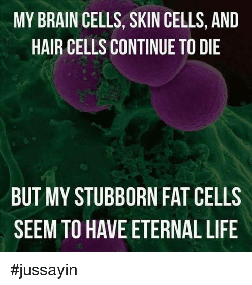 Dank, Life, and Brain: MY BRAIN CELLS, SKIN CELLS, AND  HAIR CELLS CONTINUE TO DIE  BUT MY STUBBORN FAT CELLS  SEEM TO HAVE ETERNAL LIFE #jussayin