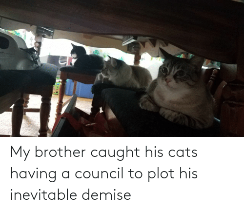 Cats: My brother caught his cats having a council to plot his inevitable demise