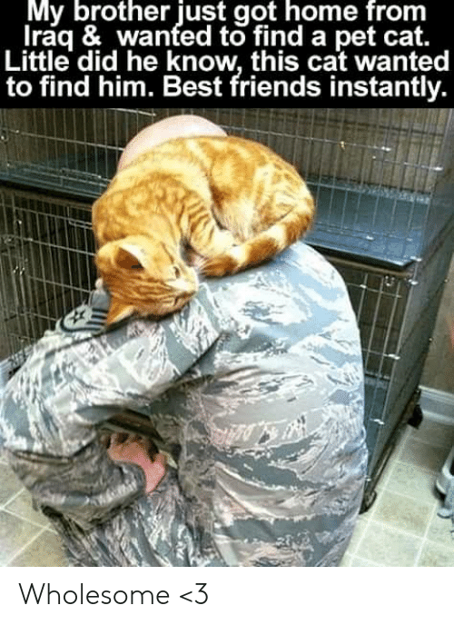 Iraq: My brother just got home from  Iraq & wanted to find a pet cat.  Little did he know, this cat wanted  to find him. Best friends instantly. Wholesome <3