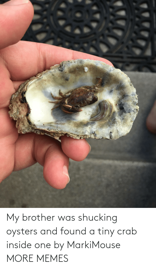 brother: My brother was shucking oysters and found a tiny crab inside one by MarkiMouse MORE MEMES
