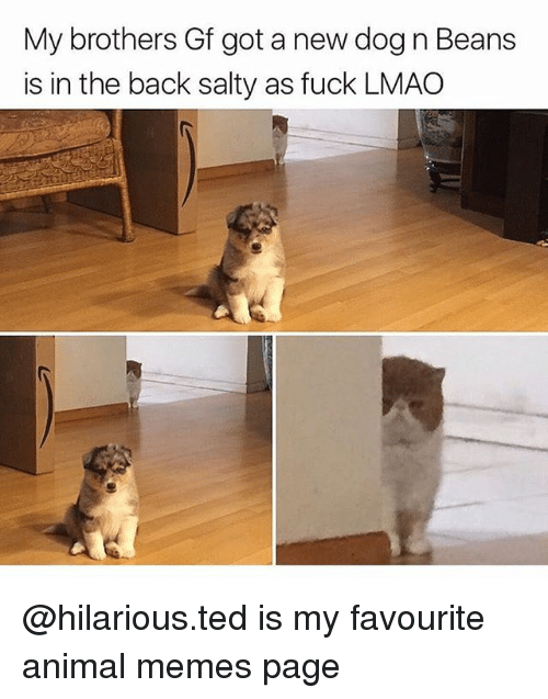 Memes Page: My brothers Gf got a new dog n Beans  is in the back salty as fuck LMAO @hilarious.ted is my favourite animal memes page