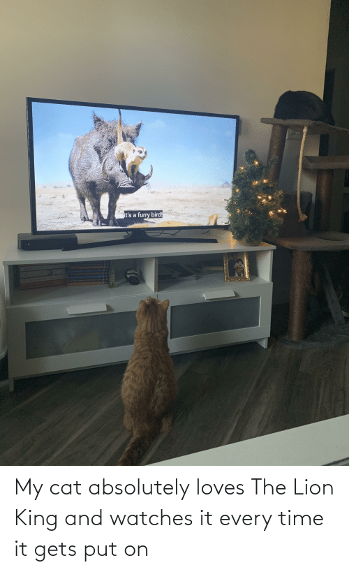 Lion King: My cat absolutely loves The Lion King and watches it every time it gets put on