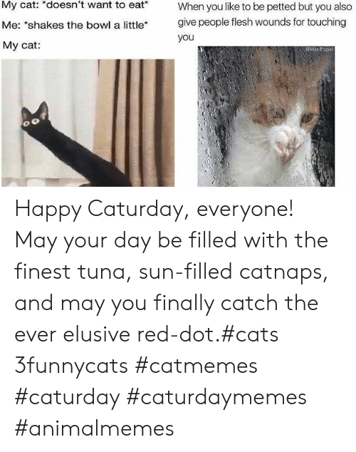 """Caturday: My cat: *doesn't want to eat*  When you like to be petted but you also  give people flesh wounds for touching  Me: """"shakes the bowl a little*  you  My cat:  GMaP Happy Caturday, everyone! May your day be filled with the finest tuna, sun-filled catnaps, and may you finally catch the ever elusive red-dot.#cats 3funnycats #catmemes #caturday #caturdaymemes #animalmemes"""