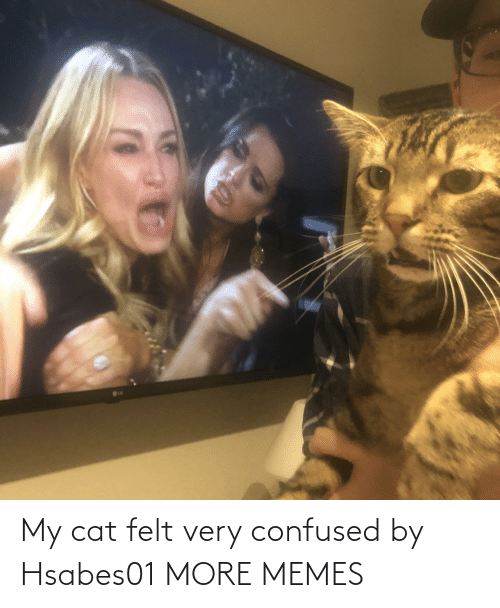 Confused, Dank, and Memes: My cat felt very confused by Hsabes01 MORE MEMES