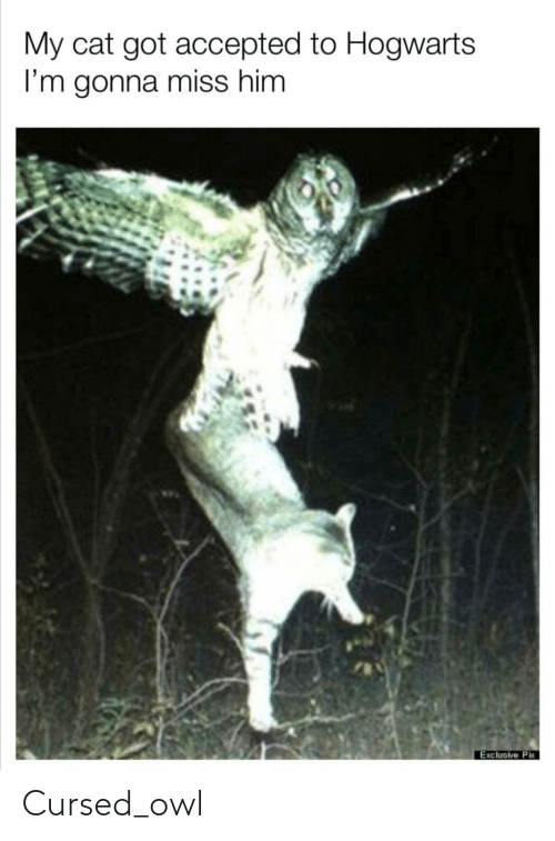 Accepted, Got, and Cat: My cat got accepted to Hogwarts  I'm gonna miss him  Exclusive Pix Cursed_owl