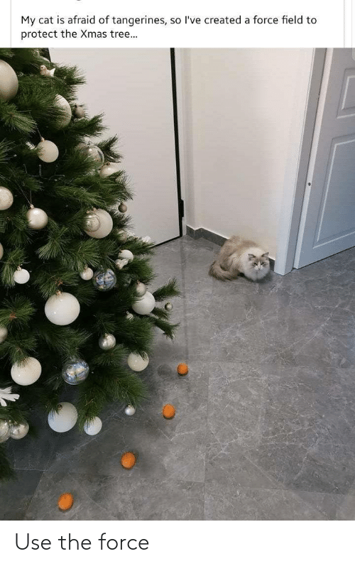 Protect: My cat is afraid of tangerines, so l've created a force field to  protect the Xmas tree... Use the force