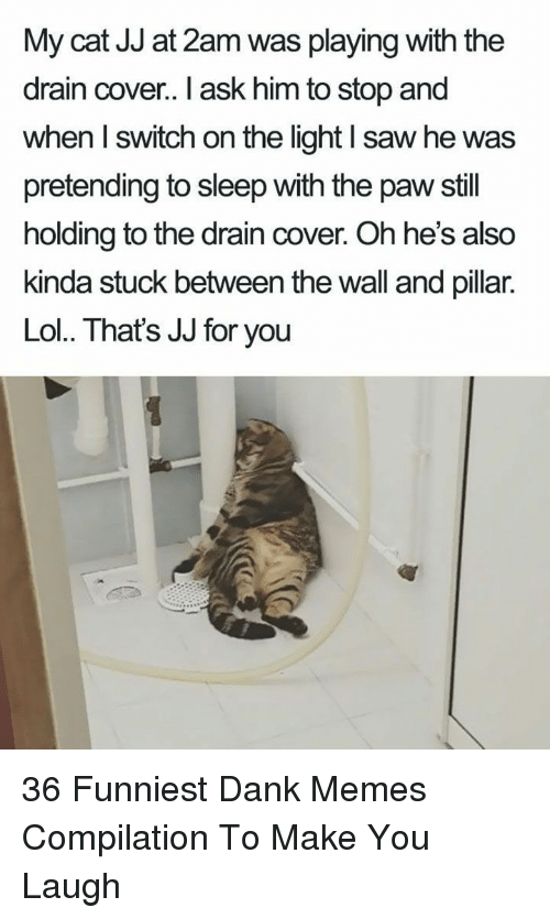 pillar: My cat JJ at 2am was playing with the  drain cover. I ask him to stop and  when I switch on the light I saw he was  pretending to sleep with the paw still  holding to the drain cover. Oh he's also  kinda stuck between the wall and pillar.  Lol. That's JJ for you 36 Funniest Dank Memes Compilation To Make You Laugh