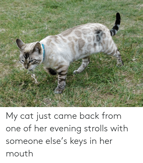 mouth: My cat just came back from one of her evening strolls with someone else's keys in her mouth