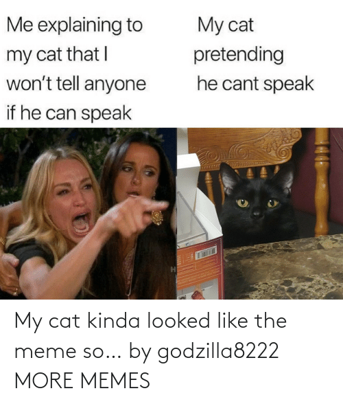 Looked: My cat kinda looked like the meme so… by godzilla8222 MORE MEMES