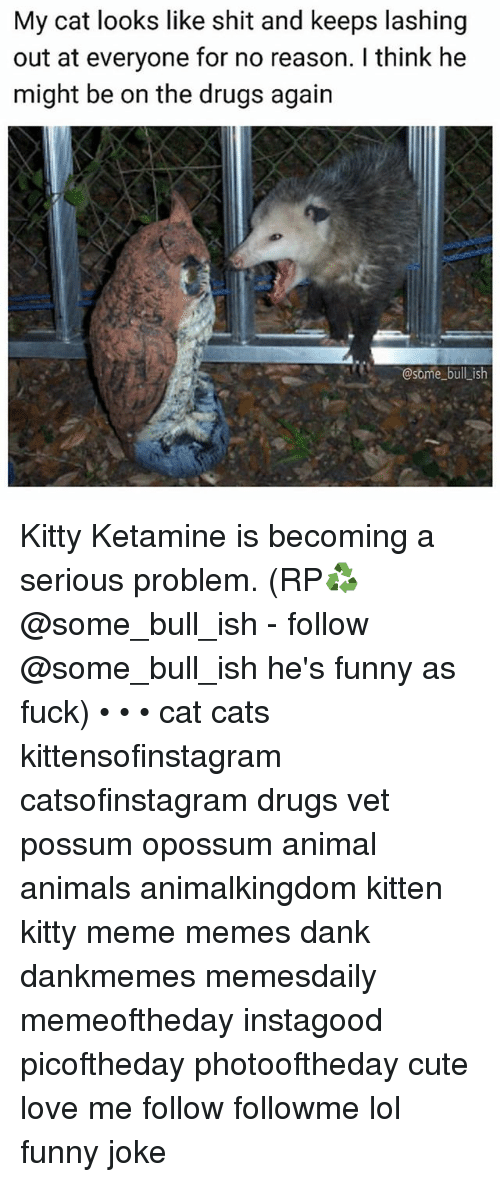 Lol Funny: My cat looks like shit and keeps lashing  out at everyone for no reason. I think he  might be on the drugs again  @some bull_ish Kitty Ketamine is becoming a serious problem. (RP♻️ @some_bull_ish - follow @some_bull_ish he's funny as fuck) • • • cat cats kittensofinstagram catsofinstagram drugs vet possum opossum animal animals animalkingdom kitten kitty meme memes dank dankmemes memesdaily memeoftheday instagood picoftheday photooftheday cute love me follow followme lol funny joke