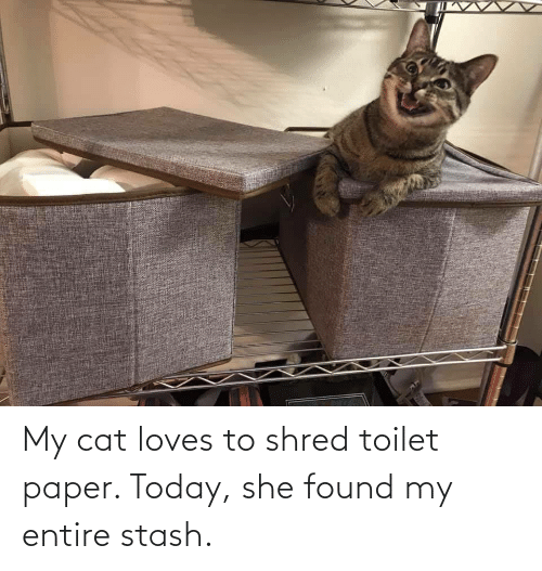 Shred: My cat loves to shred toilet paper. Today, she found my entire stash.
