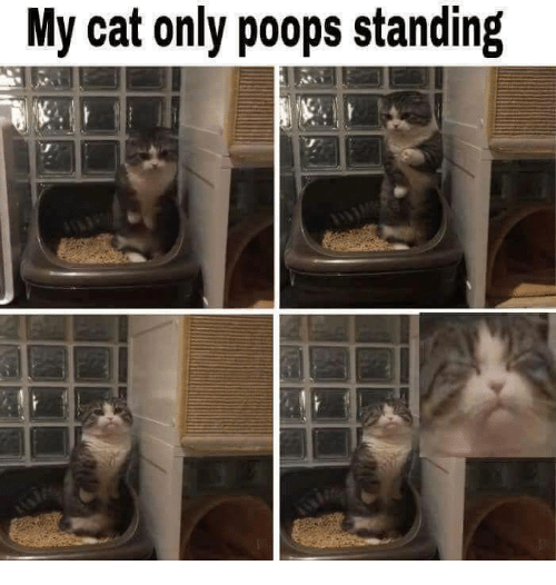 Cat,  Poops, and Only: My cat only poops standing