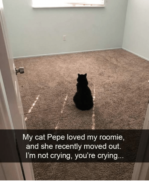 roomie: My cat Pepe loved my roomie  and she recently moved out.  I'm not crying, you're crying