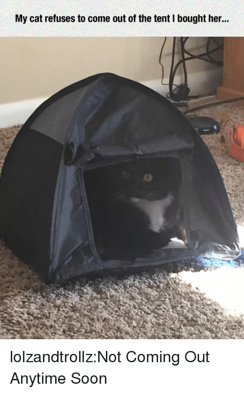 Soon..., Tumblr, and Blog: My cat refuses to come out of the tent I bought her.. lolzandtrollz:Not Coming Out Anytime Soon