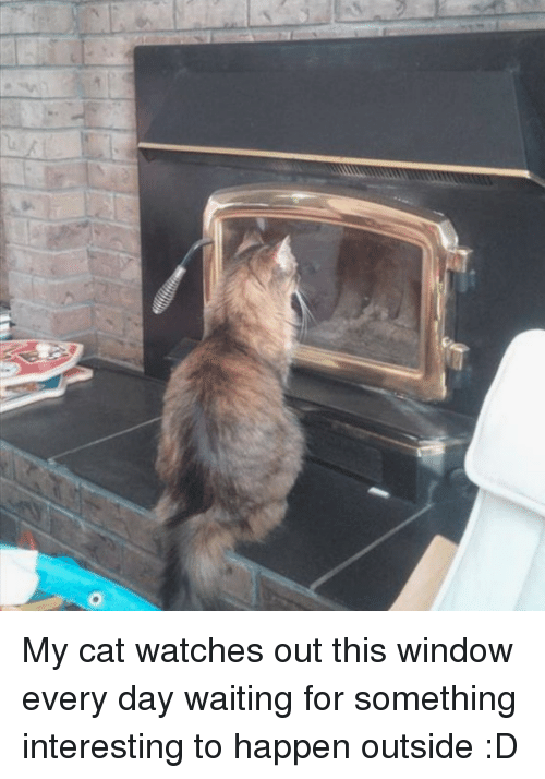 Watches, Waiting..., and Cat