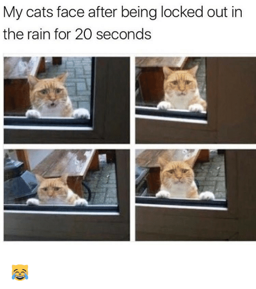 Memes, 🤖, and Locke: My cats face after being locked out in  the rain for 20 seconds 😹
