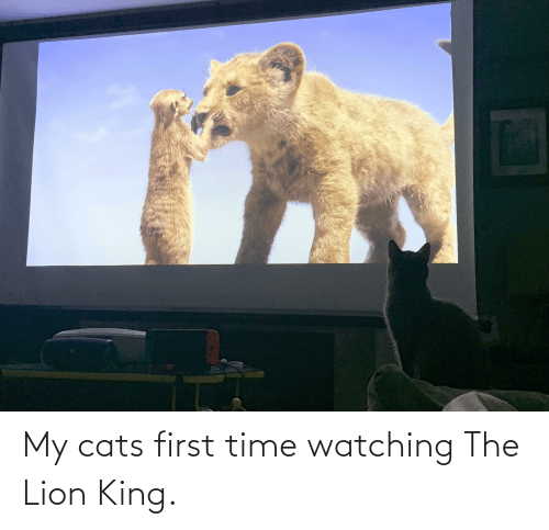 Lion King: My cats first time watching The Lion King.