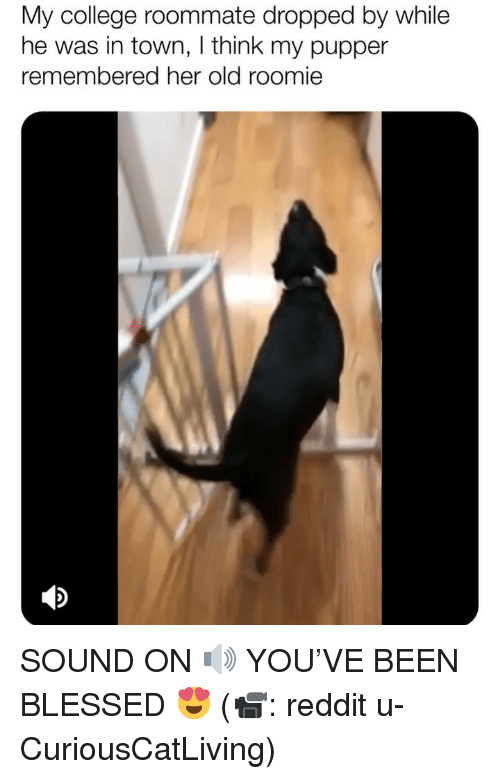 roomie: My college roommate dropped by while  he was in town, I think my pupper  remembered her old roomie SOUND ON 🔊 YOU'VE BEEN BLESSED 😍 (📹: reddit u-CuriousCatLiving)