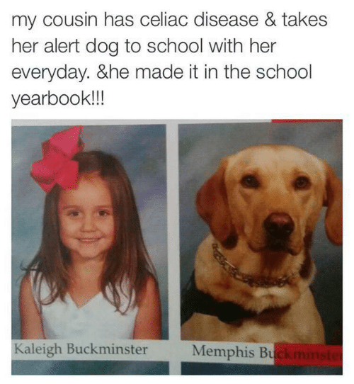 School, Her, and Dog: my cousin has celiac disease & takes  her alert dog to school with her  everyday. &he made it in the school  yearbook!!  Kaleigh Buckminster  Memphis Bu