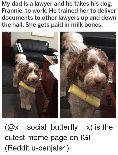 Bones, Dad, and Lawyer: My dad is a lawyer and he takes his dog,  Frannie, to work. He trained her to deliver  documents to other lawyers up and down  the hall. She gets paid in milk bones. (@x__social_butterfly__x) is the cutest meme page on IG! (Reddit u-benjals4)