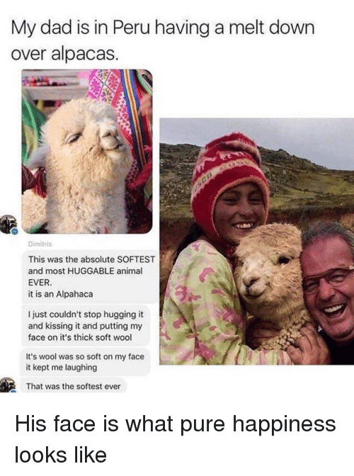 Peru: My dad is in Peru having a melt down  over alpacas  Dimitris  This was the absolute SOFTEST  and most HUGGABLE animal  EVER  it is an Alpahaca  l just couldn't stop hugging it  and kissing it and putting my  face on it's thick soft wool  It's wool was so soft on my face  it kept me laughing  That was the softest ever His face is what pure happiness looks like