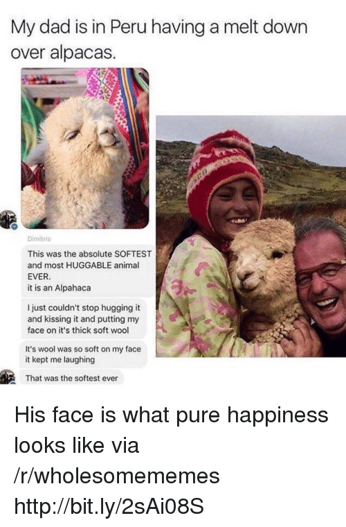 Peru: My dad is in Peru having a melt down  over alpacas  Dimitris  This was the absolute SOFTEST  and most HUGGABLE animal  EVER  it is an Alpahaca  l just couldn't stop hugging it  and kissing it and putting my  face on it's thick soft wool  It's wool was so soft on my face  it kept me laughing  That was the softest ever His face is what pure happiness looks like via /r/wholesomememes http://bit.ly/2sAi08S