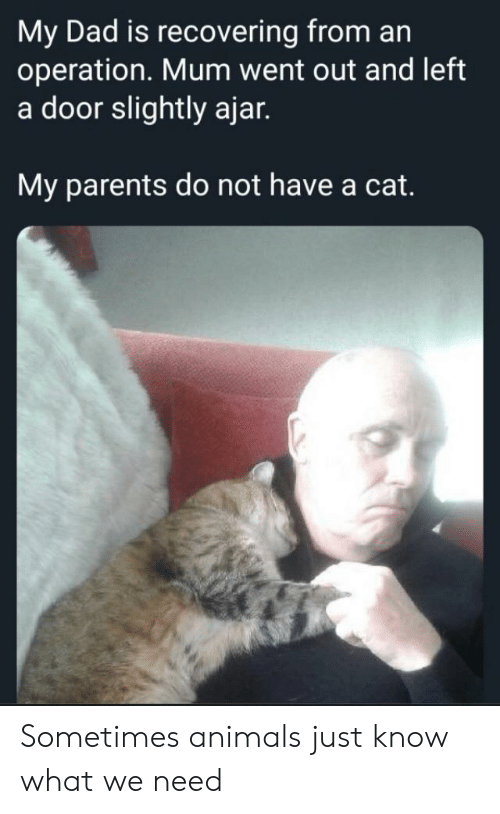 Animals, Dad, and Parents: My Dad is recovering from an  operation. Mum went out and left  a door slightly ajar.  My parents do not have a cat. Sometimes animals just know what we need