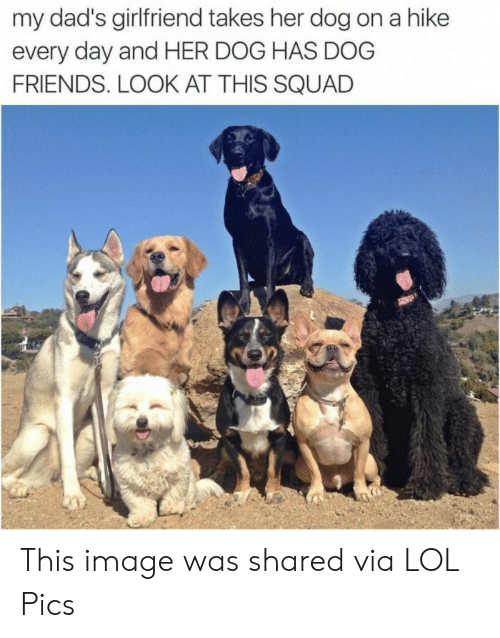 Hike: my dad's girlfriend takes her dog on a hike  every day and HER DOG HAS DOG  FRIENDS. LOOK AT THIS SQUAD This image was shared via LOL Pics