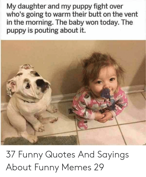 sayings: My daughter and my puppy fight over  who's going to warm their butt on the vent  in the morning. The baby won today. The  puppy is pouting about it. 37 Funny Quotes And Sayings About Funny Memes 29