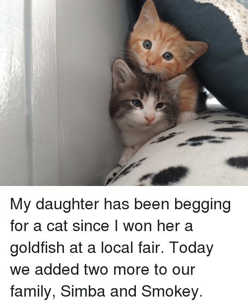 Family, Goldfish, and I Won: My daughter has been begging for a cat since I won her a goldfish at a local fair. Today we added two more to our family, Simba and Smokey.