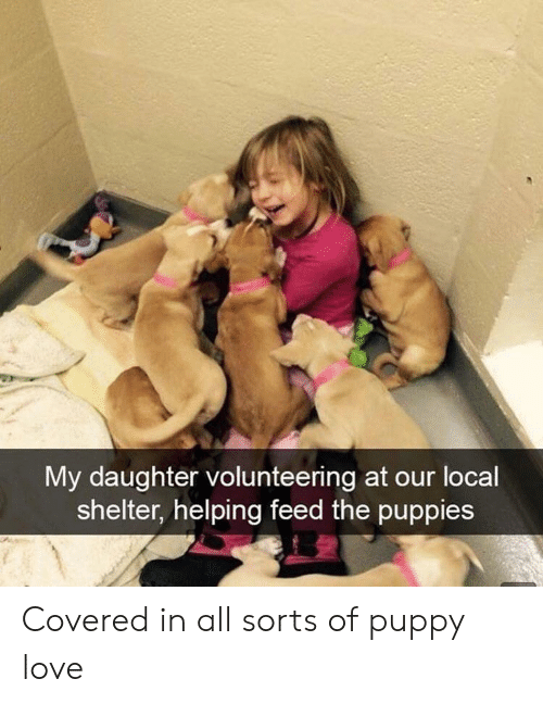 Love, Puppies, and Puppy: My daughter volunteering at our locall  shelter, helping feed the puppies Covered in all sorts of puppy love