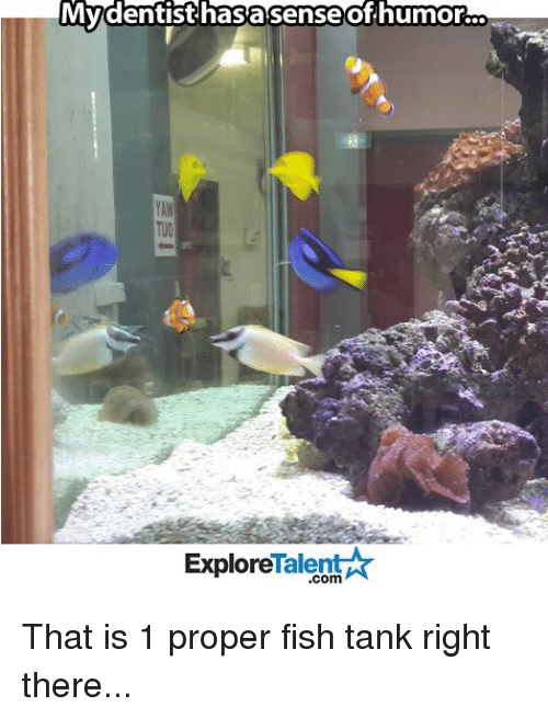 talent explore: My dentist hasasense of humor.  Talent  Explore That is 1 proper fish tank right there...