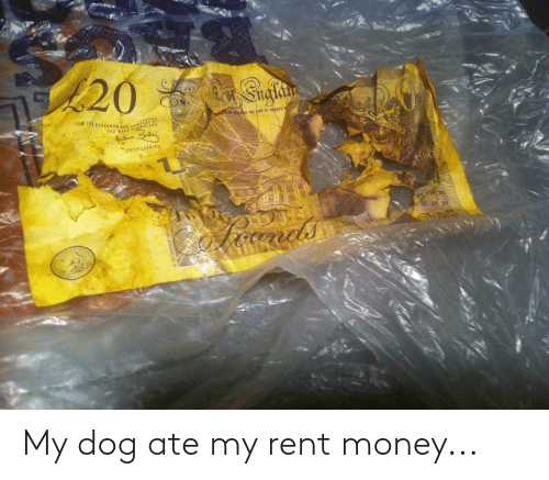 Money: My dog ate my rent money...