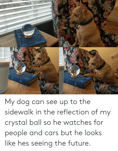 Cars, Future, and Watches: My dog can see up to the sidewalk in the reflection of my crystal ball so he watches for people and cars but he looks like hes seeing the future.