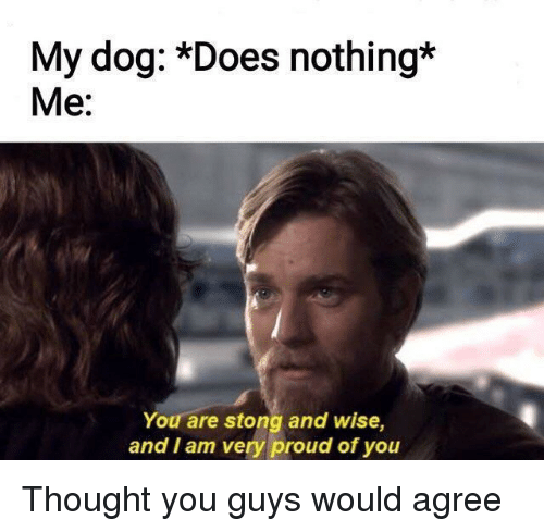Proud, Thought, and Dog: My dog: *Does nothing*  Me:  You are stong and wise,  and I am very proud of you Thought you guys would agree