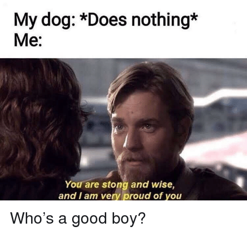 Good, Proud, and Boy: My dog: *Does nothing*  Me:  You are stong and wise,  and I am very proud of you Who's a good boy?