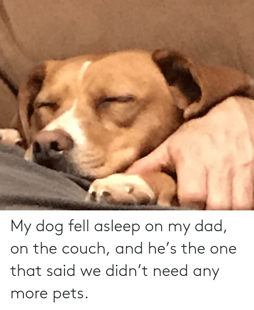 Couch: My dog fell asleep on my dad, on the couch, and he's the one that said we didn't need any more pets.