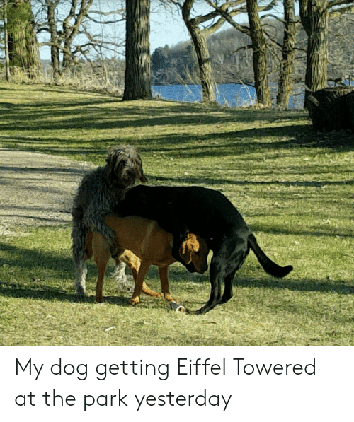 Eiffel Towered: My dog getting Eiffel Towered at the park yesterday