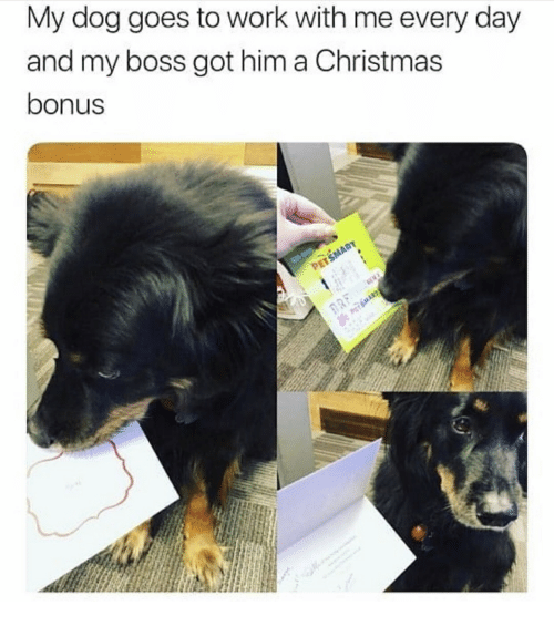 Christmas, Work, and Got: My dog goes to work with me every day  and my boss got him a Christmas  bonus