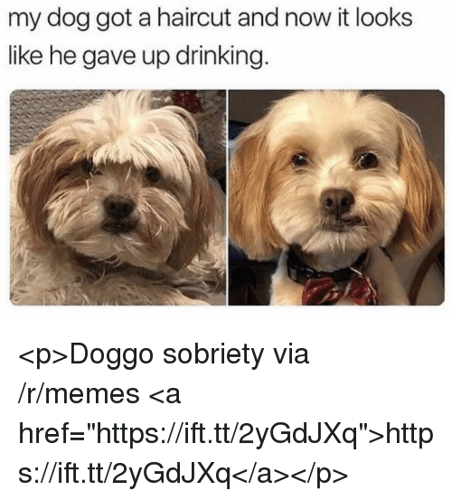 """Drinking, Haircut, and Memes: my dog got a haircut and now it looks  like he gave up drinking. <p>Doggo sobriety via /r/memes <a href=""""https://ift.tt/2yGdJXq"""">https://ift.tt/2yGdJXq</a></p>"""