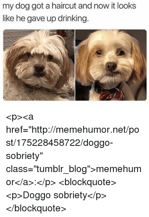 """Drinking, Haircut, and Tumblr: my dog got a haircut and now it looks  like he gave up drinking. <p><a href=""""http://memehumor.net/post/175228458722/doggo-sobriety"""" class=""""tumblr_blog"""">memehumor</a>:</p>  <blockquote><p>Doggo sobriety</p></blockquote>"""