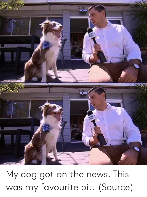 Dog: My dog got on the news. This was my favourite bit. (Source)
