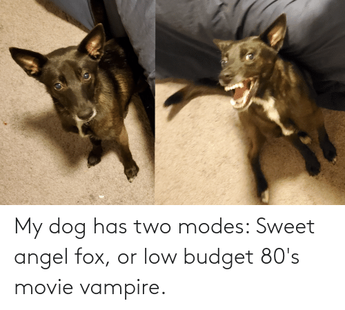 fox: My dog has two modes: Sweet angel fox, or low budget 80's movie vampire.